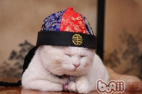 猫咪变老了会怎么样-成猫饲养